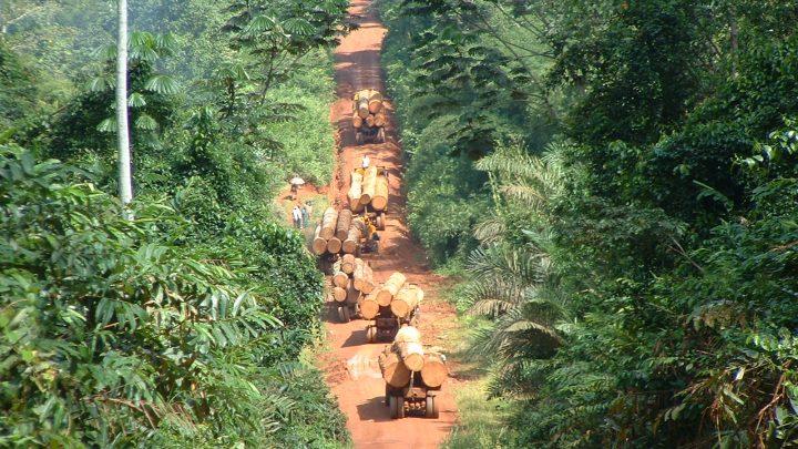 Forêt Communautaire GESFOTEK à TEKMO