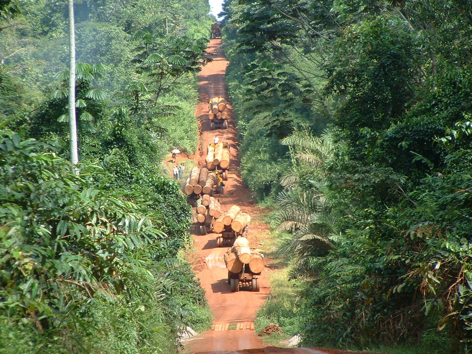 cameroun-trafic_bois-2